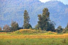Природа исправляет аграрный край Стоковое Изображение