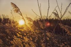 Природа и растительность на заходе солнца стоковые изображения