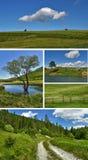природа коллажа Стоковые Фото