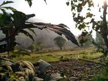 Природа красива Стоковая Фотография RF