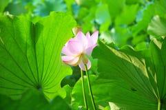 природа красотки Стоковое Фото