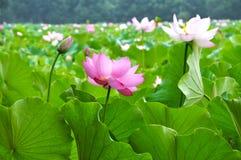 природа красотки Стоковая Фотография