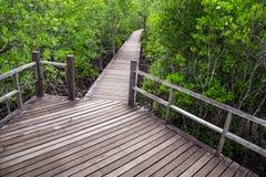 Природа леса мангровы стоковые фотографии rf