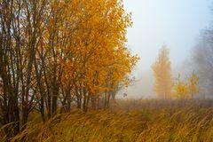 Природа лета области Москвы Лес осени в тумане 2018 троица st sergius sergiev России posad скита environment стоковое изображение