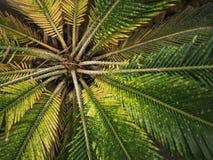 Природа лист зеленого растения цветка флоры в предпосылке леса Стоковая Фотография RF