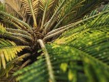 Природа лист зеленого растения цветка флоры в предпосылке леса Стоковые Фото