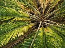Природа лист зеленого растения цветка флоры в предпосылке леса Стоковая Фотография