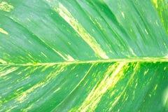 Природа лист крупного плана зеленая для предпосылки зеленый цвет предпосылки выходит вал макроса стоковая фотография rf