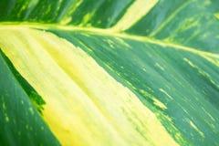 Природа лист крупного плана зеленая для предпосылки зеленый цвет предпосылки выходит вал макроса стоковое фото