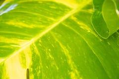 Природа лист крупного плана зеленая для предпосылки зеленый цвет предпосылки выходит вал макроса стоковые фотографии rf