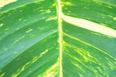 Природа лист крупного плана зеленая для предпосылки зеленый цвет предпосылки выходит вал макроса стоковая фотография