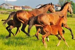 Природа лошади стоковое фото rf