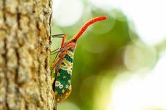 Природа насекомого Pyrops candelaria Стоковая Фотография