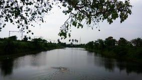 Природа на заходе солнца, пруд деревьев воды железнодорожный стоковые фото