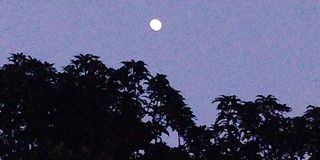 Природа на ноче стоковое фото rf