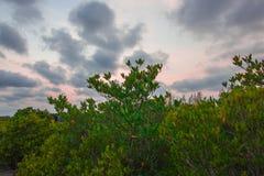 Природа неба Стоковые Изображения