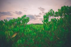 Природа неба Стоковые Фото