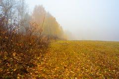 Природа области Москвы Лес осени в тумане троица st sergius sergiev России posad скита environment стоковые фотографии rf