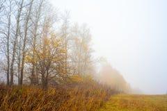 Природа области Москвы Лес осени в тумане 2018 троица st sergius sergiev России posad скита environment стоковое изображение