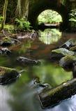 природа одичалая Стоковое Изображение RF