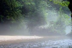 природа одичалая Стоковая Фотография