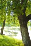 природа озера Стоковые Фотографии RF