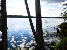 Природа около воды Стоковое Изображение