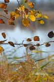 природа падения Стоковая Фотография