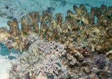природа подводная Стоковые Фото