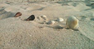 Природа, предпосылка, seashells Стоковое Изображение RF