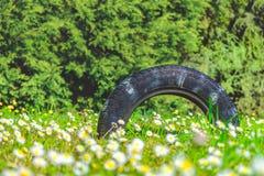 Природа предпосылки автошины лета несенная проступью стоковая фотография