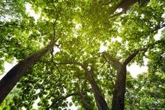 Природа предпосылки дерева Стоковое Изображение RF