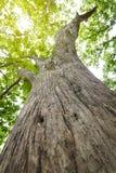 Природа предпосылки дерева Стоковые Фотографии RF