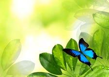 природа предпосылки красивейшая стоковые фотографии rf