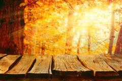 Природа предпосылки осени Стоковые Фото