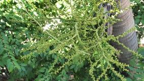 Природа предпосылки плодоовощ кабеля лисы ладони на дереве Стоковое Изображение