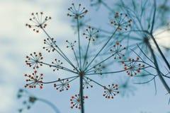 природа предпосылки стилизованная Стоковое Фото