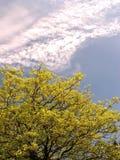 природа приветствию Стоковые Изображения RF
