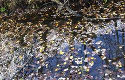Природа, Россия, шикарный ландшафт осени, стоковые изображения rf