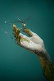 природа руки Стоковые Изображения RF