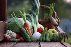 Природа сбора свежего овоща внешняя Стоковые Фото