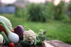 Природа сбора свежего овоща внешняя Стоковое фото RF