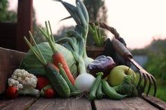 Природа сбора свежего овоща внешняя Стоковая Фотография