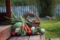 Природа сбора свежего овоща внешняя Стоковые Фотографии RF