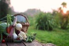 Природа сбора свежего овоща внешняя Стоковое Изображение RF