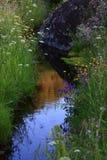 природа свежести Стоковые Изображения RF
