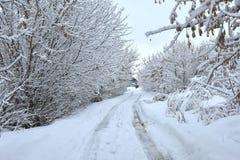 Природа сельской местности зимы за городом стоковые изображения