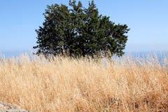 природа Сицилия Стоковые Изображения RF