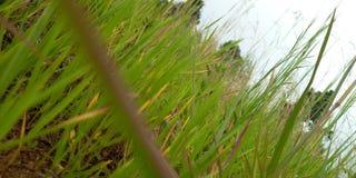 Природа терпение стоковое изображение rf