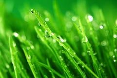 природа травы предпосылки стоковое фото rf